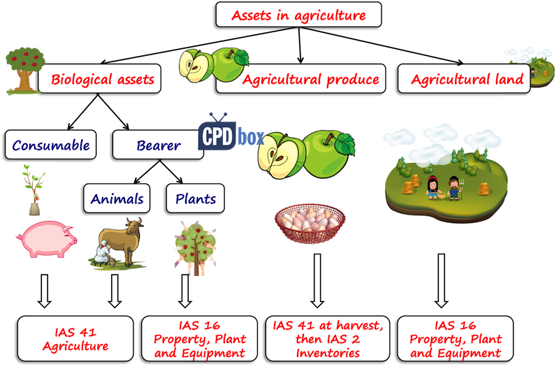 Assets in agriculture
