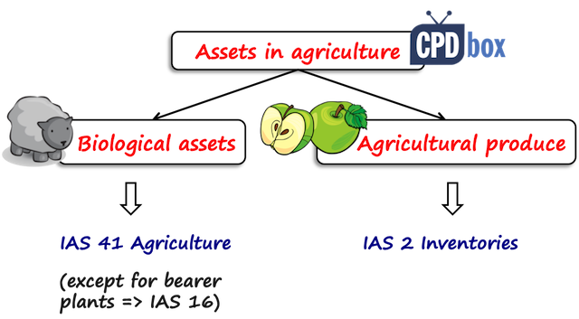 Top 3 Questions about IAS 41 Agriculture - IFRSbox - Making